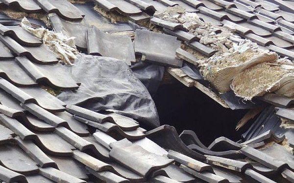 DIY Termite Pest Control