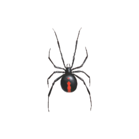 red back spider control