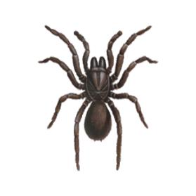 female trapdoor spider