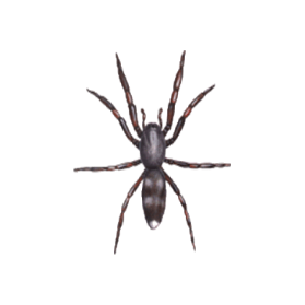 whitetail spider control