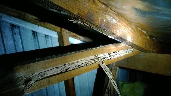 Extensive damage caused by termites to roof timbers