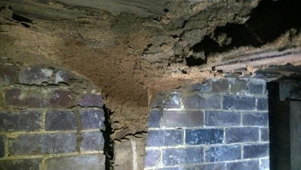 Termites building galleries and gaining access into floorboards