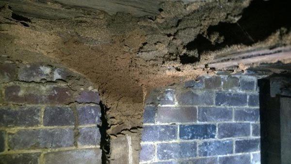 termite damage termite inspection