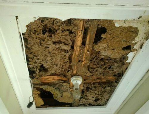 All You Should Know About Termite Inspection Before Buying a Home