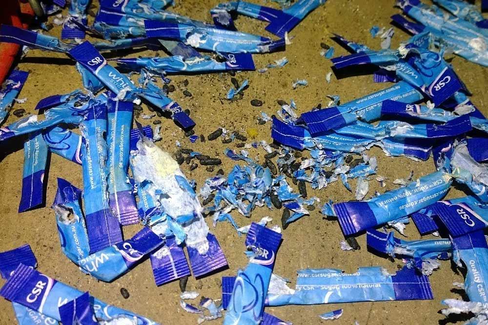 Sugar Sachets Chewed by Rats