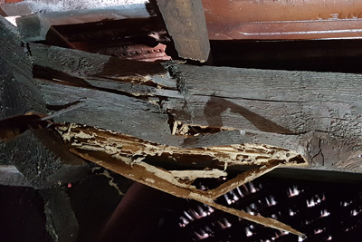 Termite damage to roof timbers