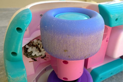 Wasp Nest In a Toy