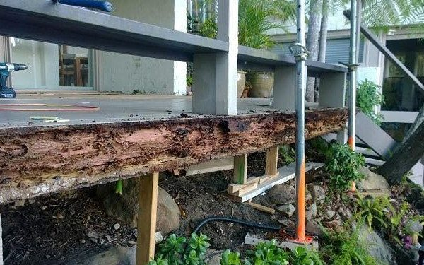 Termite damage bearers and joists